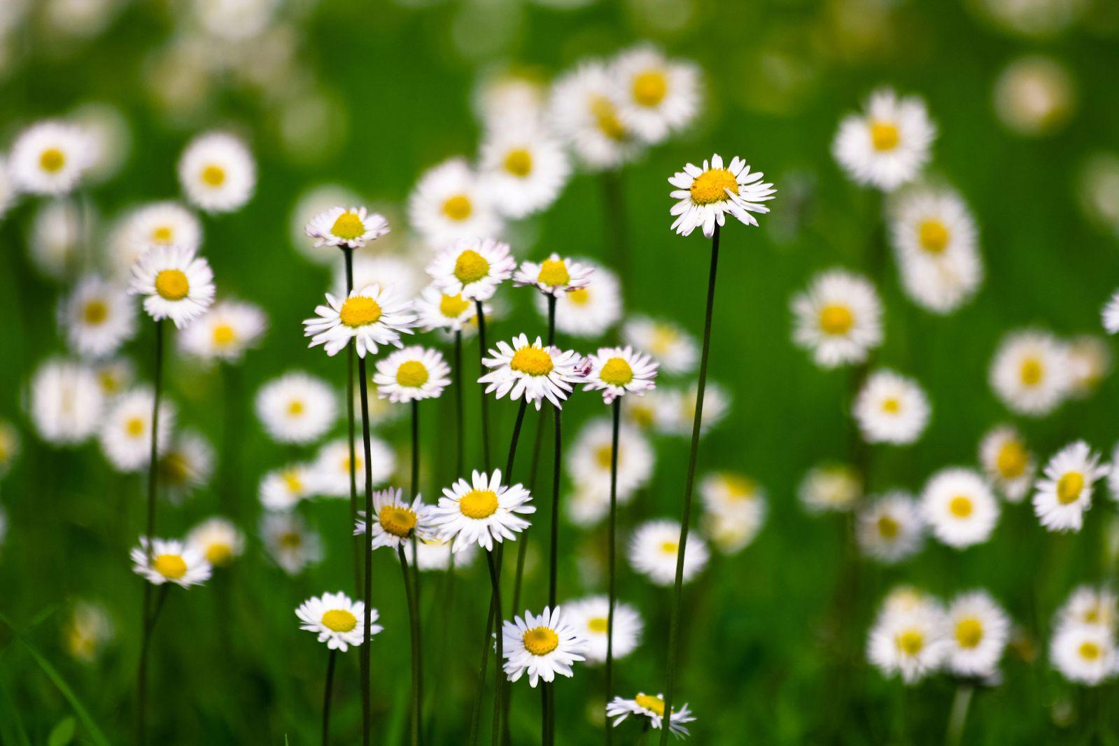 Hoa cỏ dại Hinh-n23
