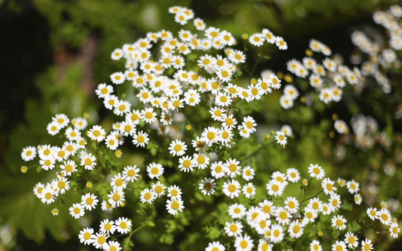 Hoa cỏ dại Hinh-n24
