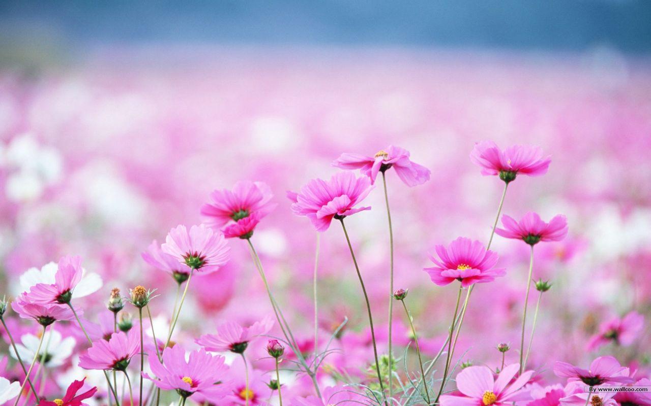 Hoa cỏ dại Hinh-n25