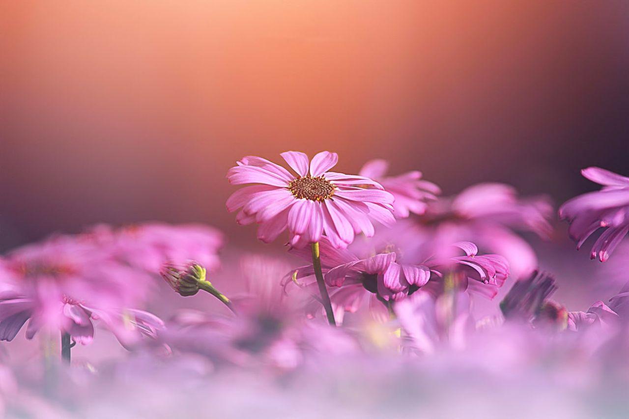 Hoa cỏ dại Hinh-n26