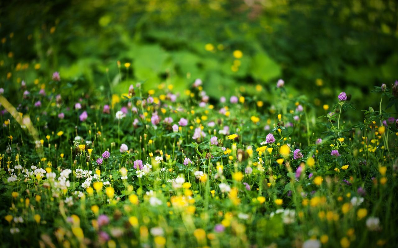 Hoa cỏ dại Hinh-n27