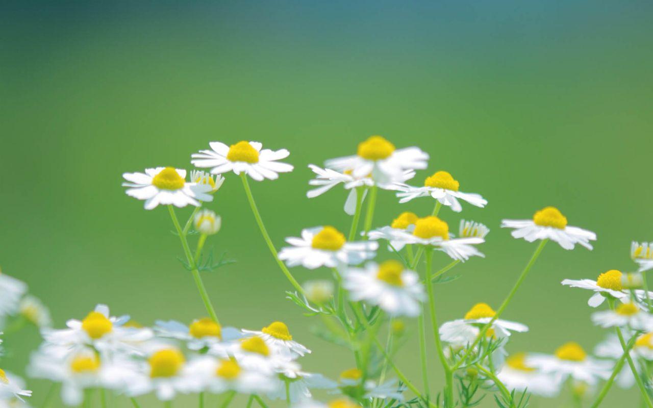 Hoa cỏ dại Hinh-n28