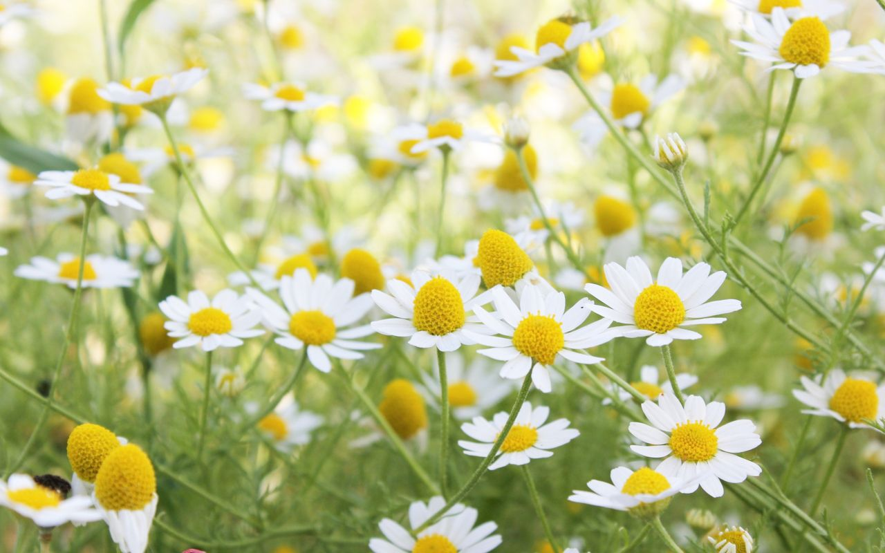 Hoa cỏ dại Hinh-n29
