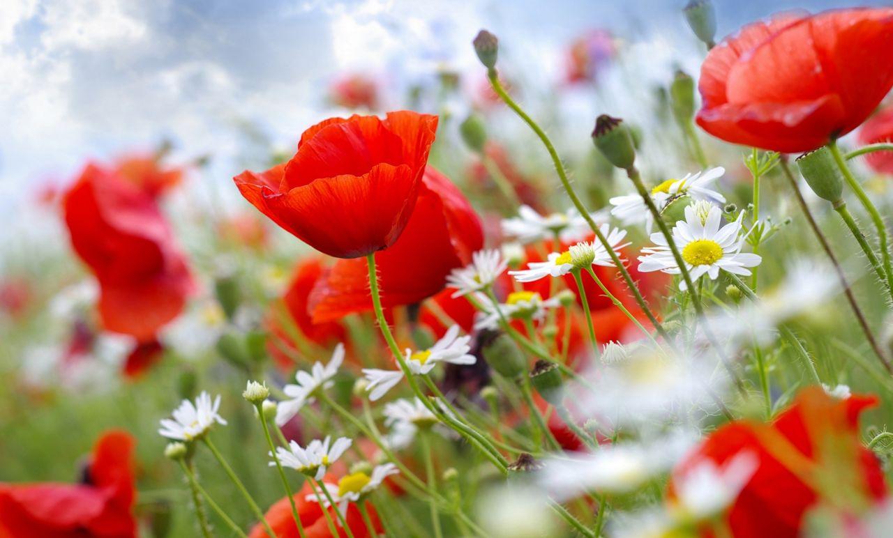 Hoa cỏ dại Hinh-n30