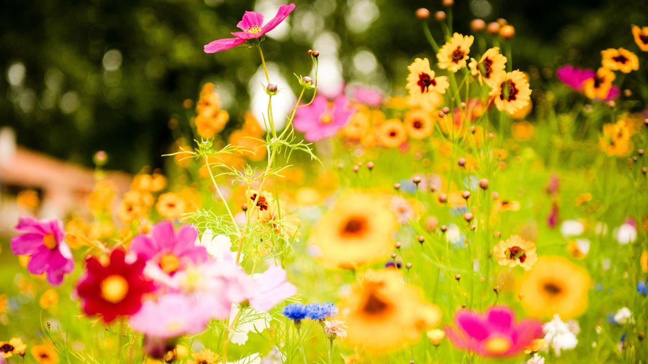 Hoa cỏ dại Hinh-n33
