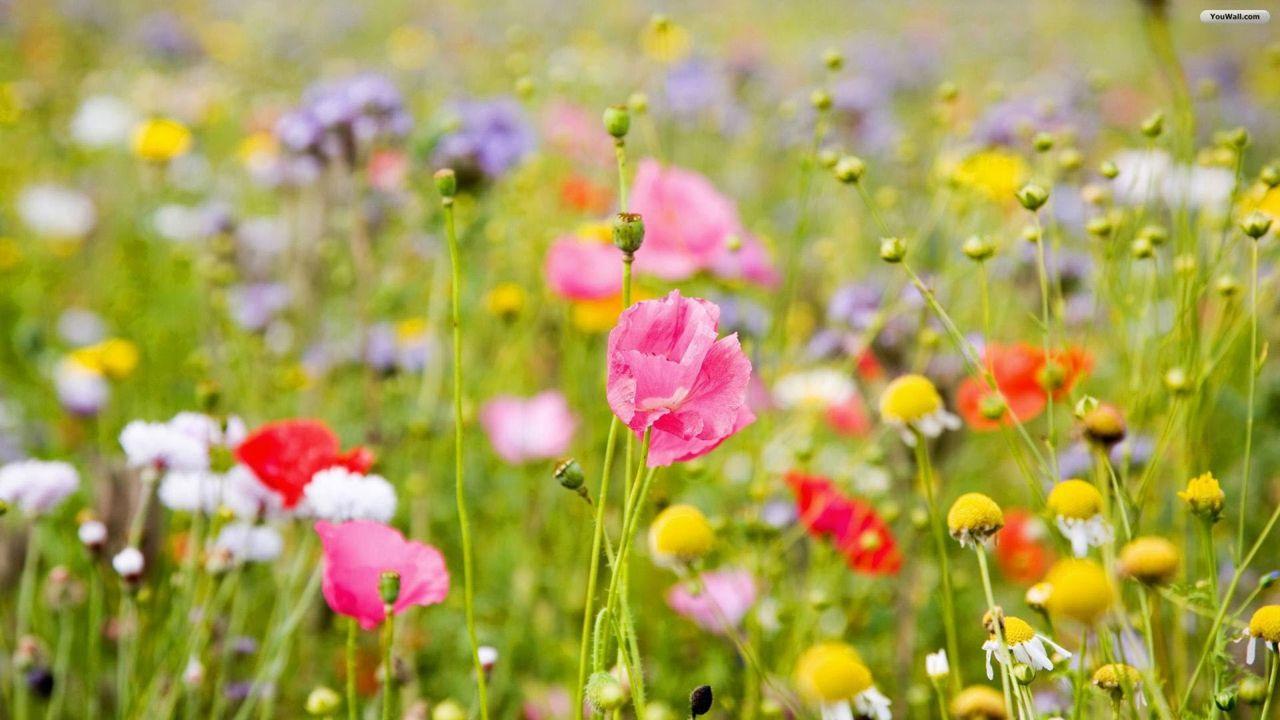 Hoa cỏ dại Hinh-n34