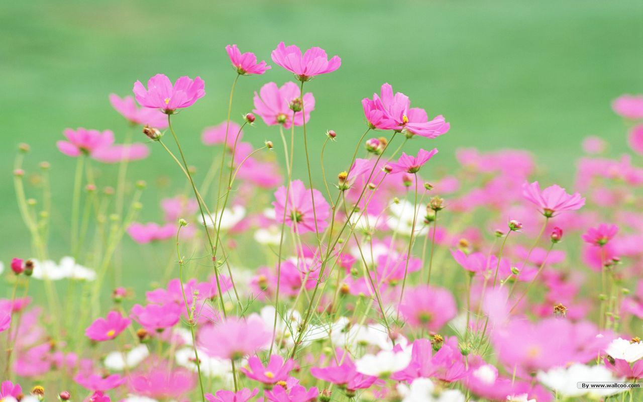 Hoa cỏ dại Hinh-n35