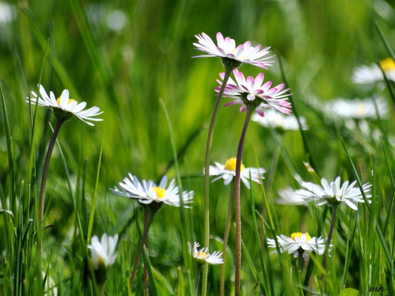 Hoa cỏ dại Hinh-n36