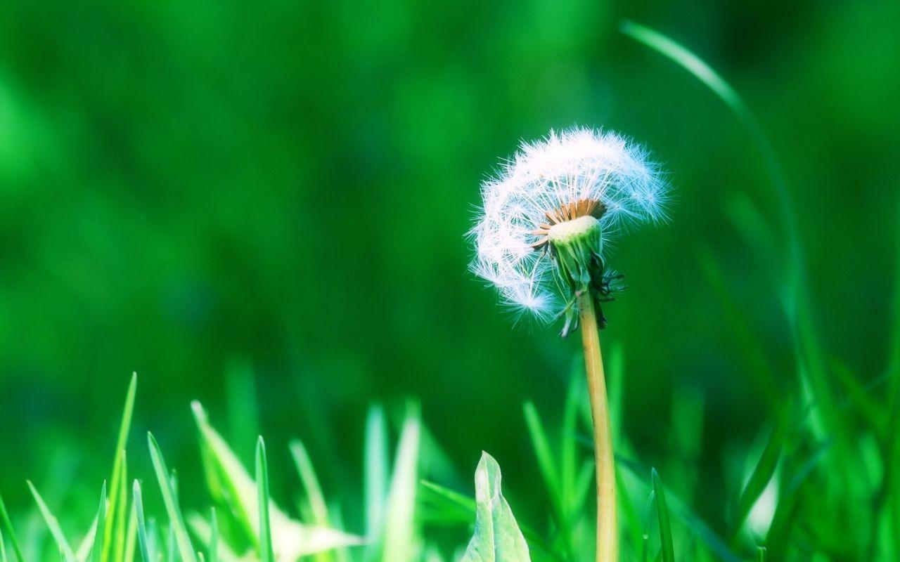 Hoa cỏ dại Hinh-n37