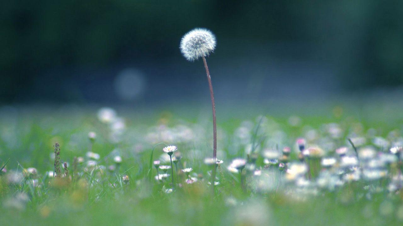 Hoa cỏ dại Hinh-n38