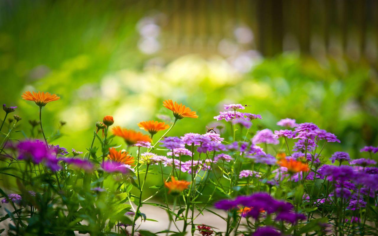 Hoa cỏ dại Hinh-n42