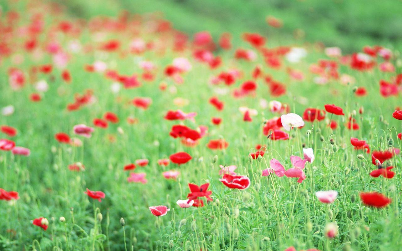 Hoa cỏ dại Hinh-n43