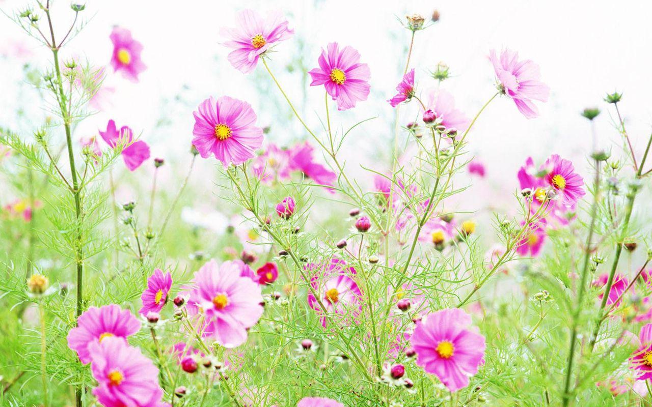 Hoa cỏ dại Hinh-n44