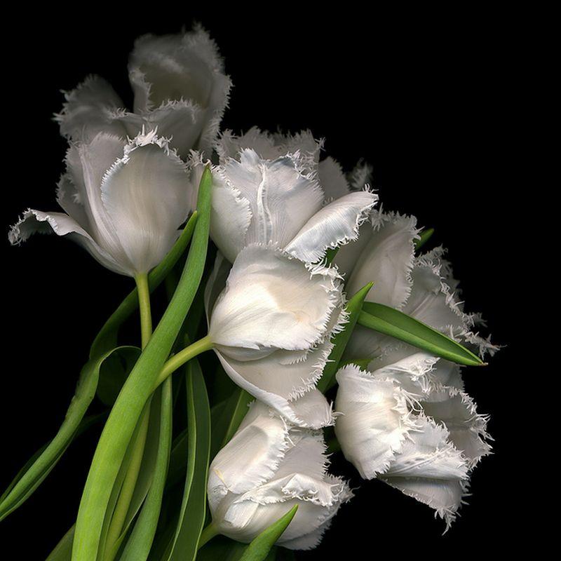 Vẻ đẹp những đoá hoa theo phong cách Magda Indigo Hoa-de10