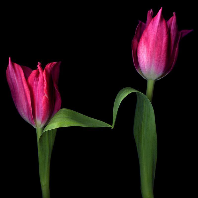 Vẻ đẹp những đoá hoa theo phong cách Magda Indigo Hoa-de12