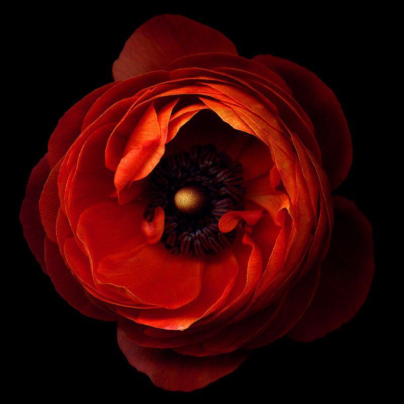 Vẻ đẹp những đoá hoa theo phong cách Magda Indigo Hoa-de13
