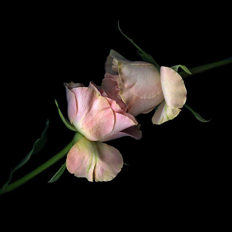 Vẻ đẹp những đoá hoa theo phong cách Magda Indigo Hoa-de15