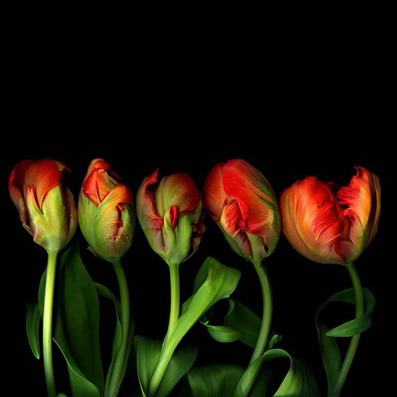 Vẻ đẹp những đoá hoa theo phong cách Magda Indigo Hoa-de17