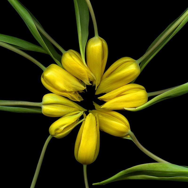 Vẻ đẹp những đoá hoa theo phong cách Magda Indigo Hoa-de19