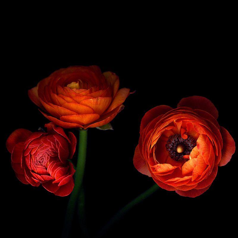 Vẻ đẹp những đoá hoa theo phong cách Magda Indigo Hoa-de20