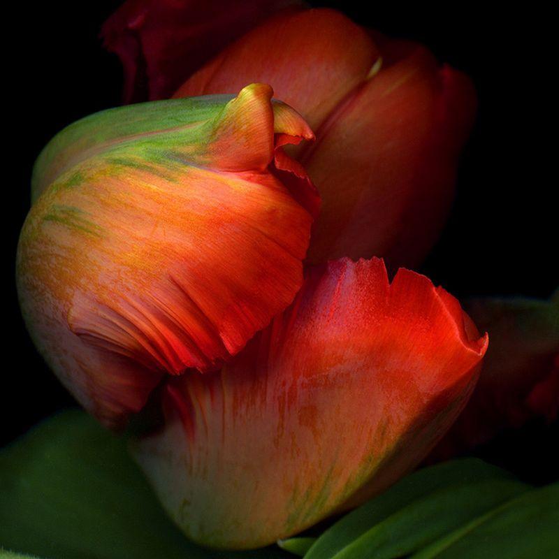 Vẻ đẹp những đoá hoa theo phong cách Magda Indigo Hoa-de24