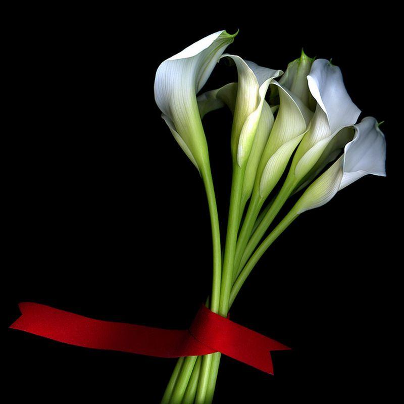 Vẻ đẹp những đoá hoa theo phong cách Magda Indigo Hoa-de25