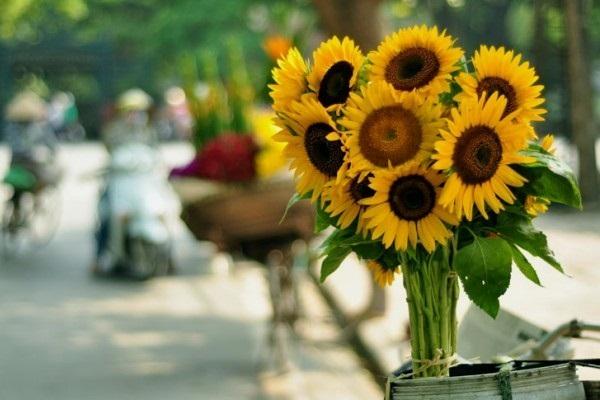 Loài hoa đem lại may mắn cho 12 cung Hoàng đạo Hoa-hu10