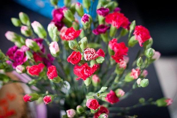 Loài hoa đem lại may mắn cho 12 cung Hoàng đạo Ky-thu10