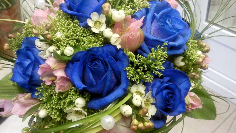 Hoa hồng xanh dương Ngam-v16