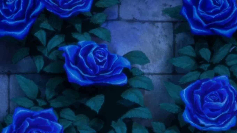 Hoa hồng xanh dương Ngam-v27