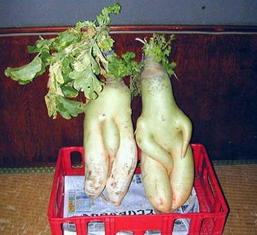 Những hình ảnh hài hước về rau củ Om-bun12