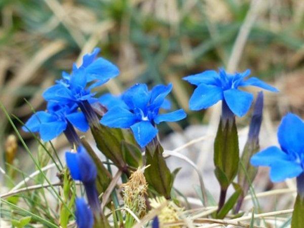 Loài hoa đem lại may mắn cho 12 cung Hoàng đạo Spring10