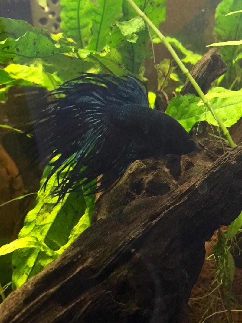 Black Orchid... Mon CT... RIP Image34