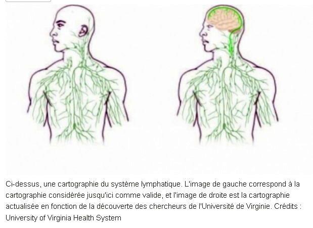 Des vaisseaux lymphatiques inconnus découverts dans le cerveau Vaisse10