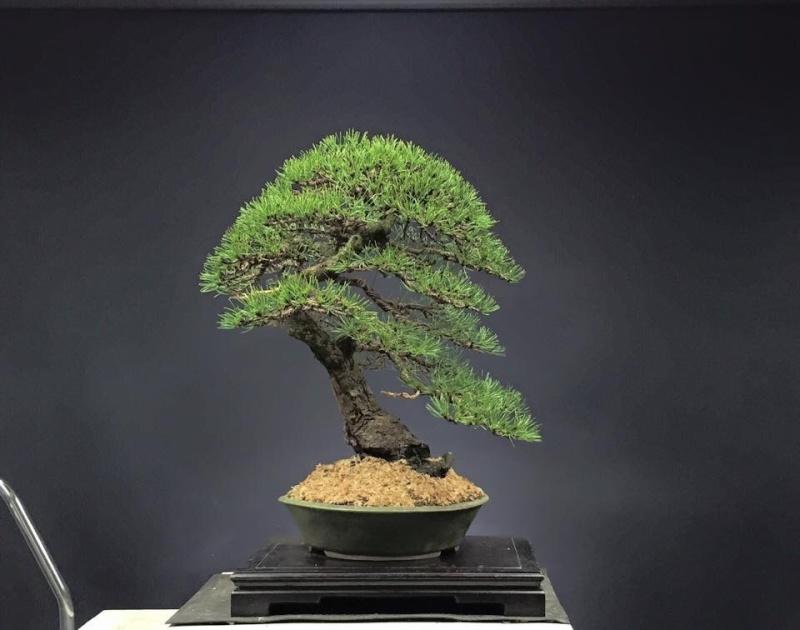 Pinus mugo 2004 - Page 4 Image10