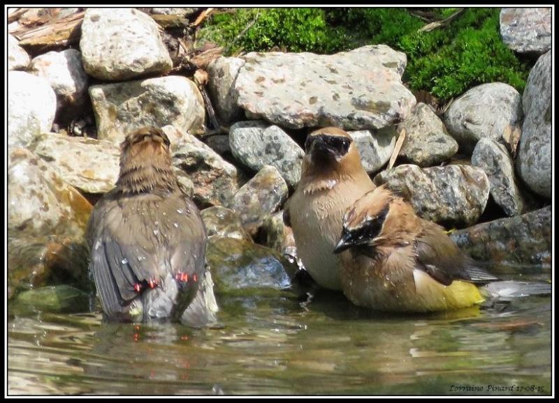 Visite surprise à l'étang 17-08-13