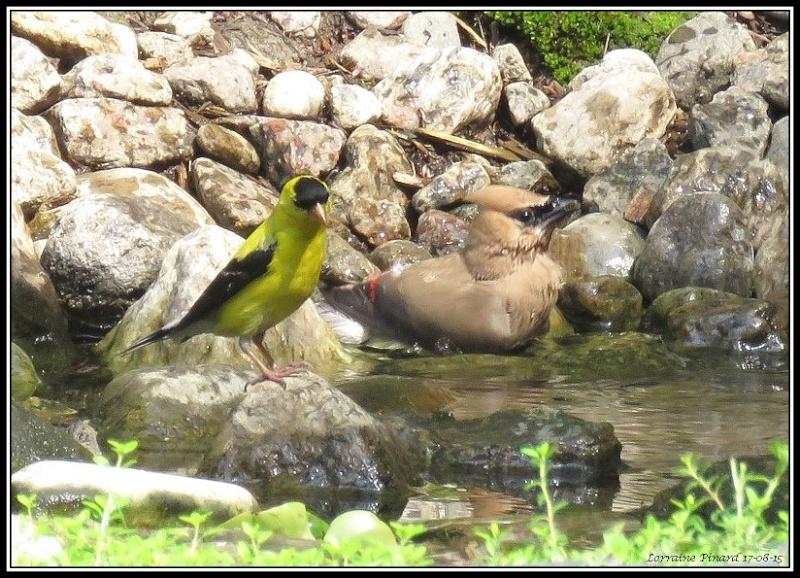 Visite surprise à l'étang 17-08-14