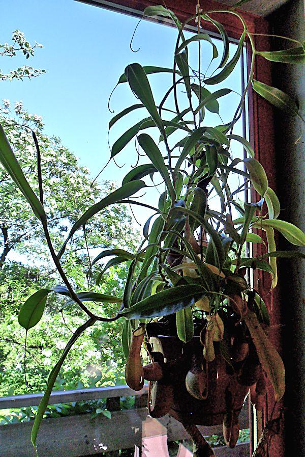 Jardin Botanique de Saverne en Alsace (Bas-Rhin - France) le 4 juin 2015 Col_de11