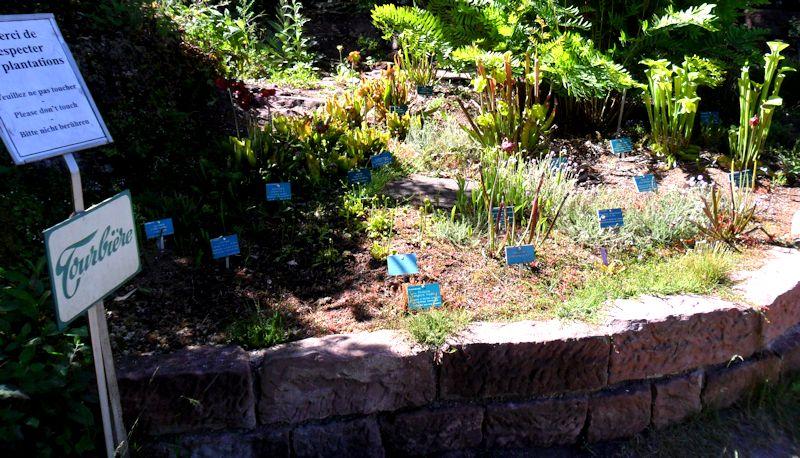 Jardin Botanique de Saverne en Alsace (Bas-Rhin - France) le 4 juin 2015 Col_de12