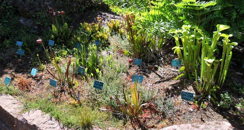 Jardin Botanique de Saverne en Alsace (Bas-Rhin - France) le 4 juin 2015 Col_de13
