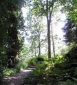 Jardin Botanique de Saverne en Alsace (Bas-Rhin - France) le 4 juin 2015 Col_de23