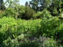 Jardin Botanique de Saverne en Alsace (Bas-Rhin - France) le 4 juin 2015 Col_de24