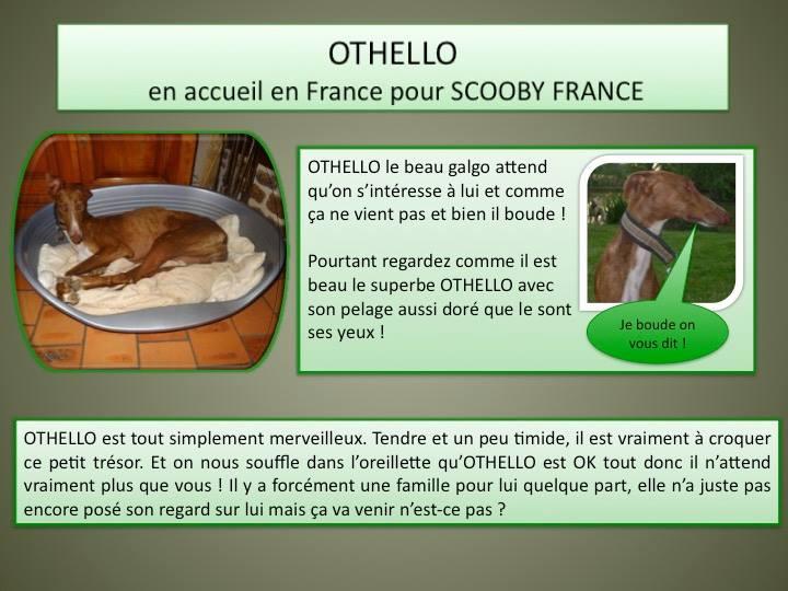 Othello galgo Scooby France –Adopté/devenu OTTO - Page 2 11233310