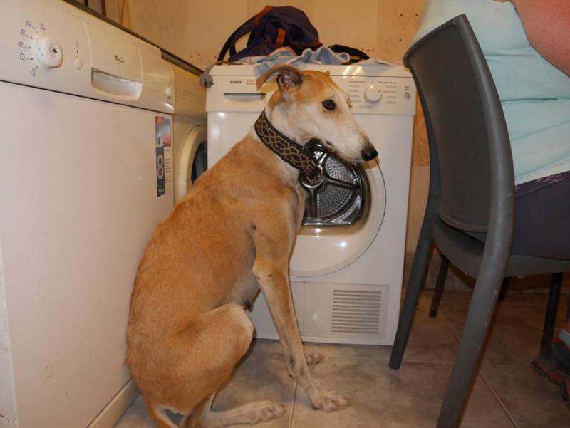 Barbas douce barbuda ,un coeur à prendre Scooby France/ Adoptée - Page 3 11822510