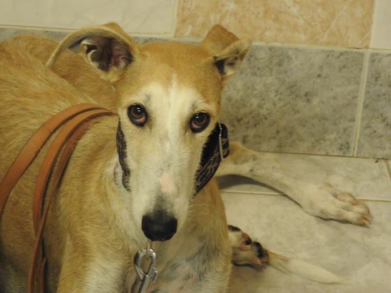 Barbas douce barbuda ,un coeur à prendre Scooby France/ Adoptée - Page 3 11838614