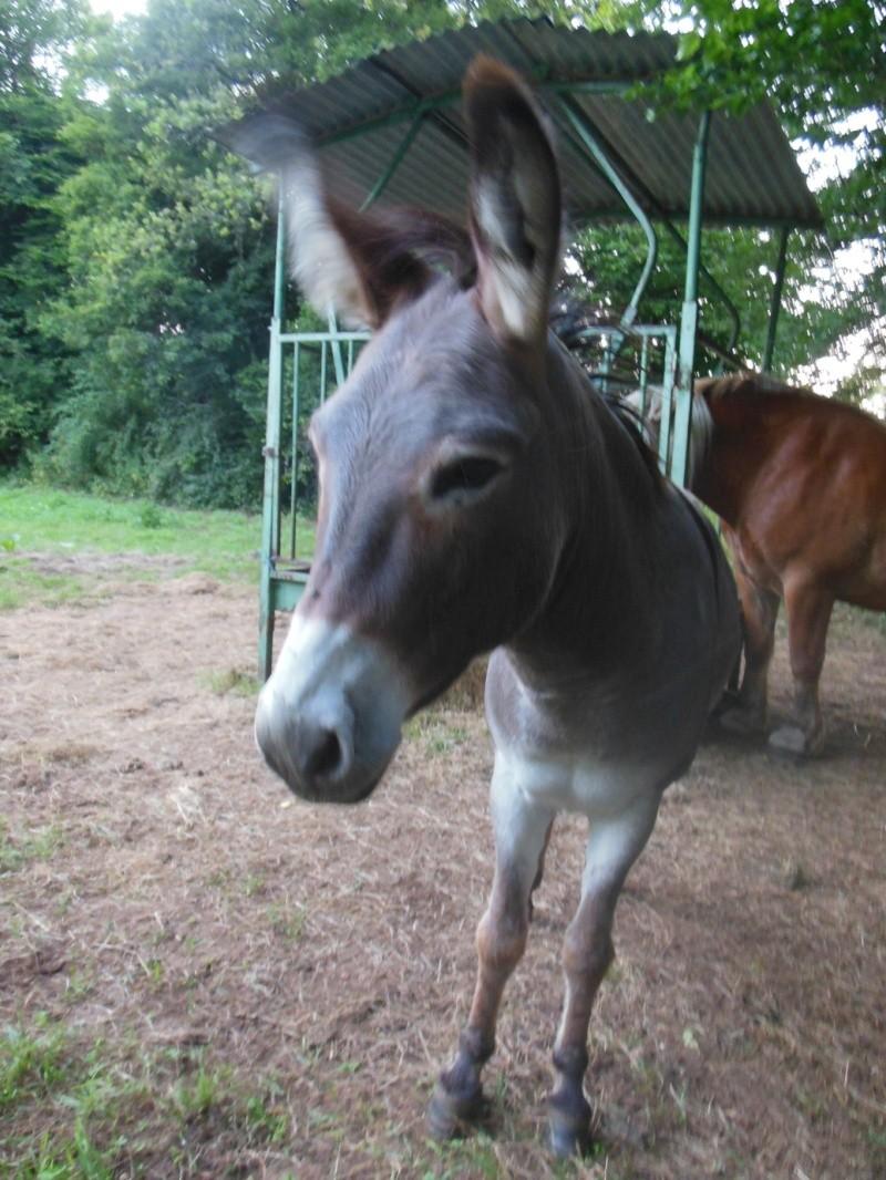 DIDOU - âne né en 2008  - adopté en mars 2011 par Comtois&co - Page 3 Didou_14