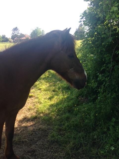 DOLLAR - OI type poney né en  1991 - adopté en juillet 2011 Img_2116