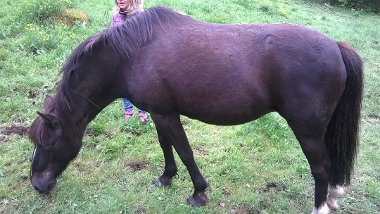 HAVANE - OI poney  née en 1995 - adoptée en mars 2014 par dona carlota Wp_20115