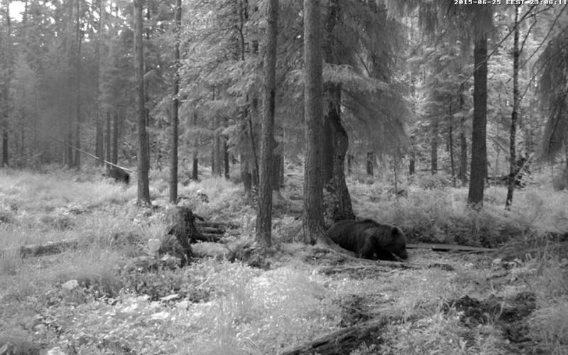 Alataguse Bear Cam 2013 - Page 7 Vlcsna23