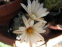 un kipik en fleurs Juin_219